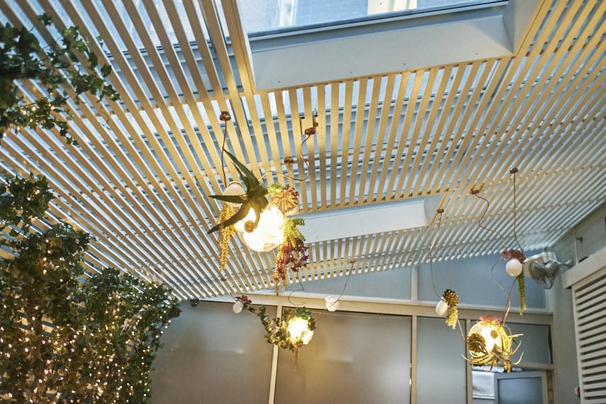 Chandeliers with plants