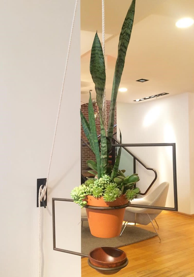 Large line plant wall mouth green plant