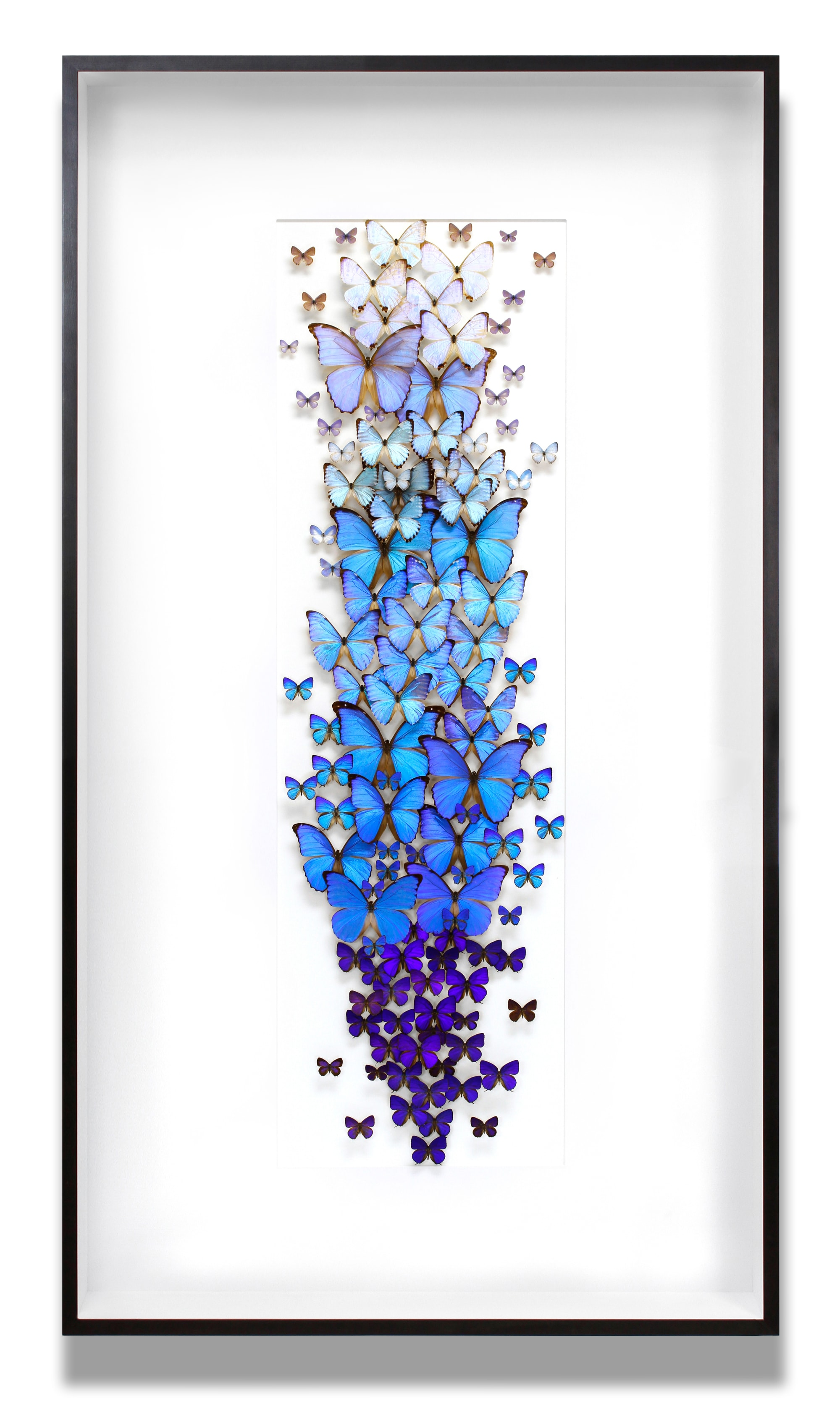 Blue fading butterfly wall decor