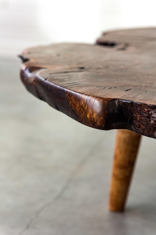 table live edge ROOT slab burl Pacific Black Walnut taxidermy wall art