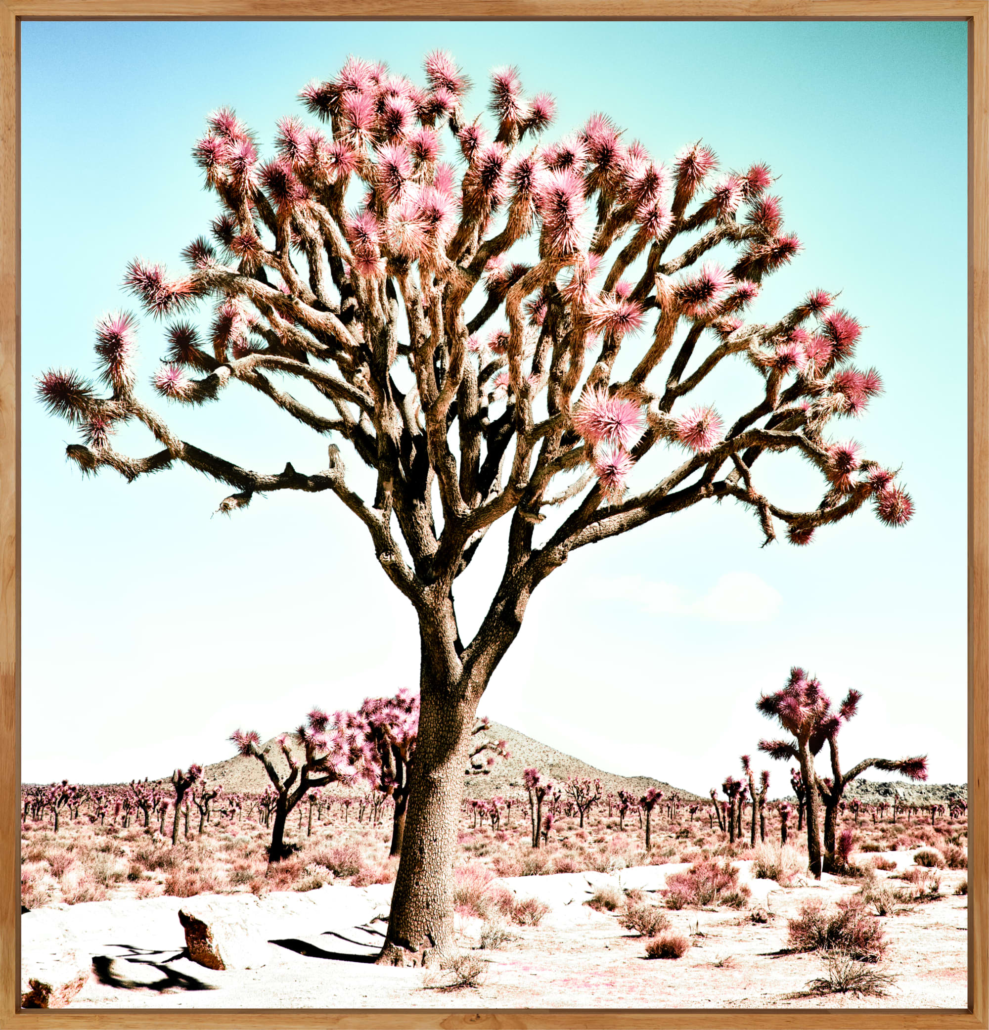 Photography by Kristin  Hart  Studios seen at Joshua Tree National Park - PASTEL DESERT, California