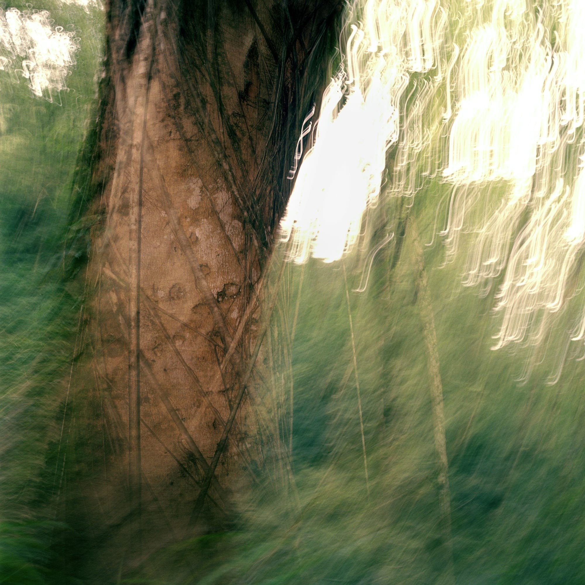 Photography by Tabitha Soren seen at Downtown, San Francisco, CA, San Francisco - Weathering series - Trees