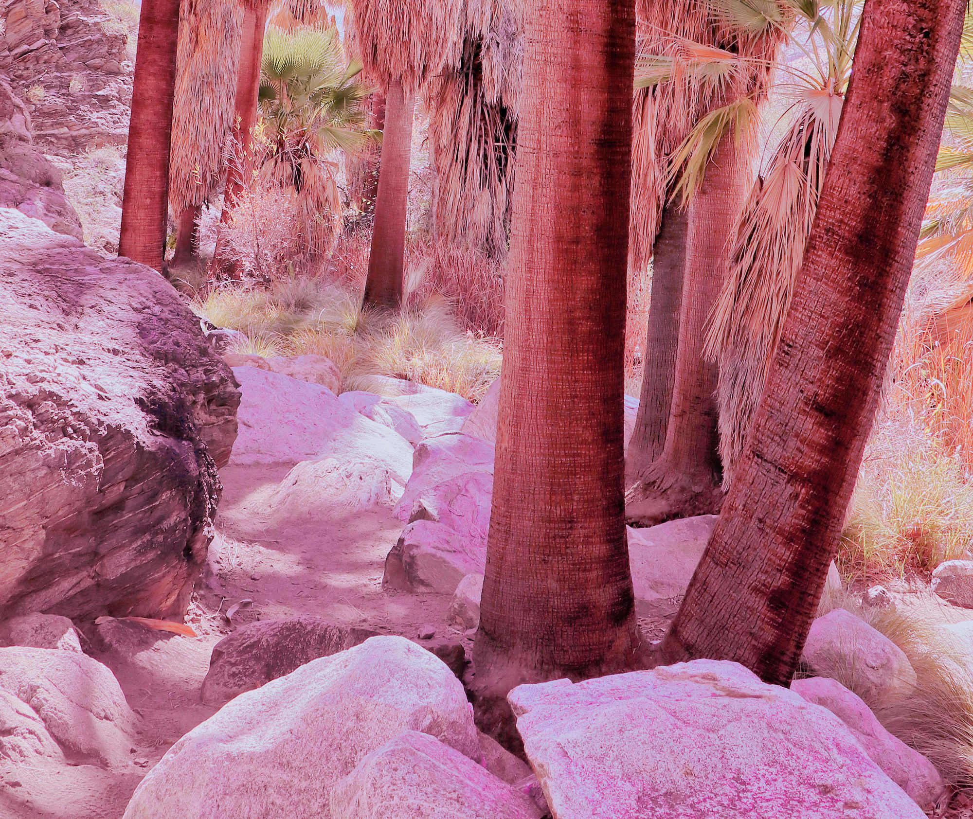 Photography by Kristin  Hart  Studios at Agua Caliente Indian Reservation, Palm Springs - DESERT HUES 4, California
