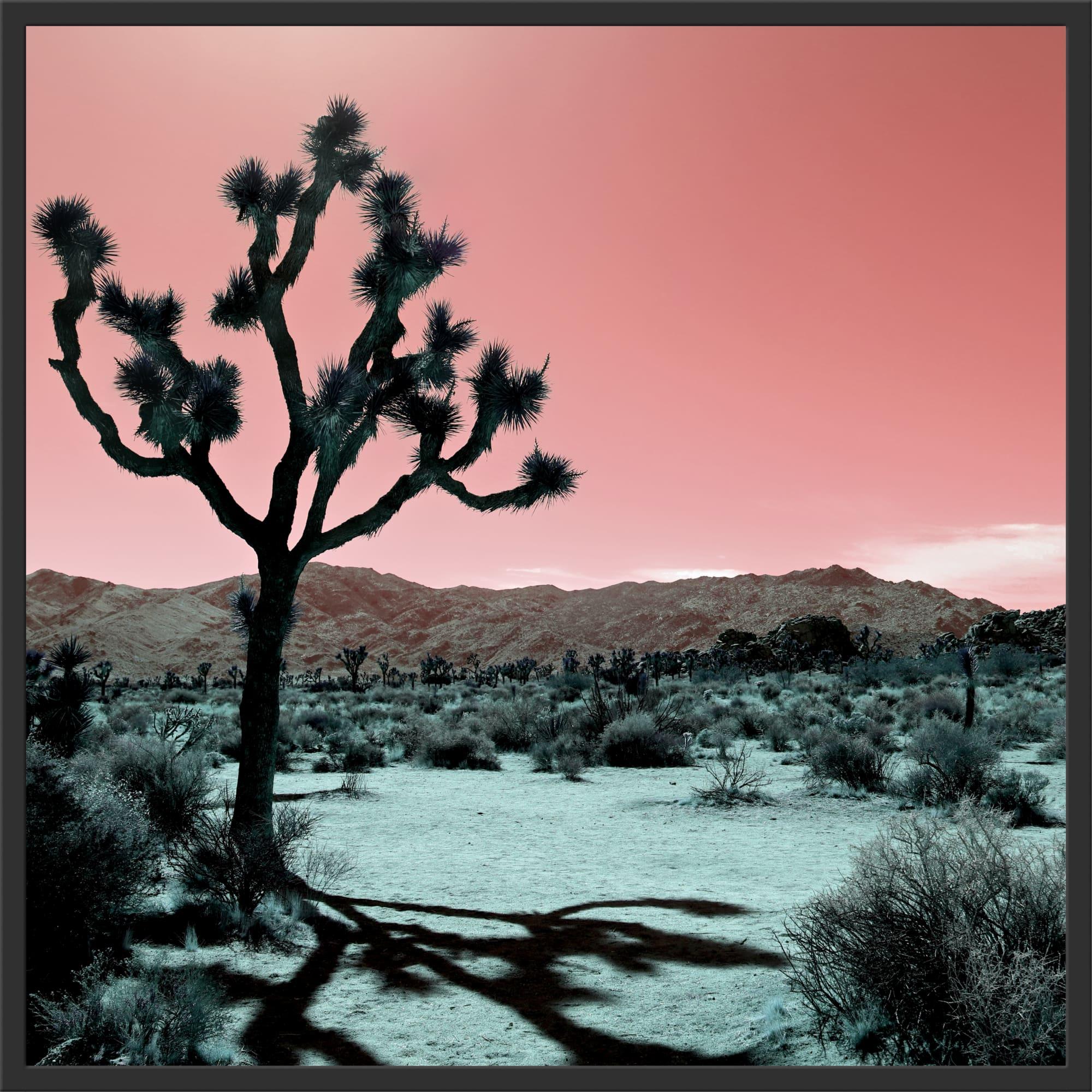 Photography by Kristin  Hart  Studios seen at Joshua Tree National Park - JOSHUA TREE - ROSE, California