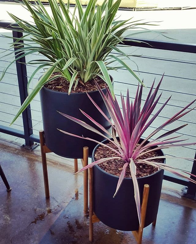 Plants & Landscape by Botanika Interior Plantscapes seen at Tender Greens, San Diego - Tender Greens patio
