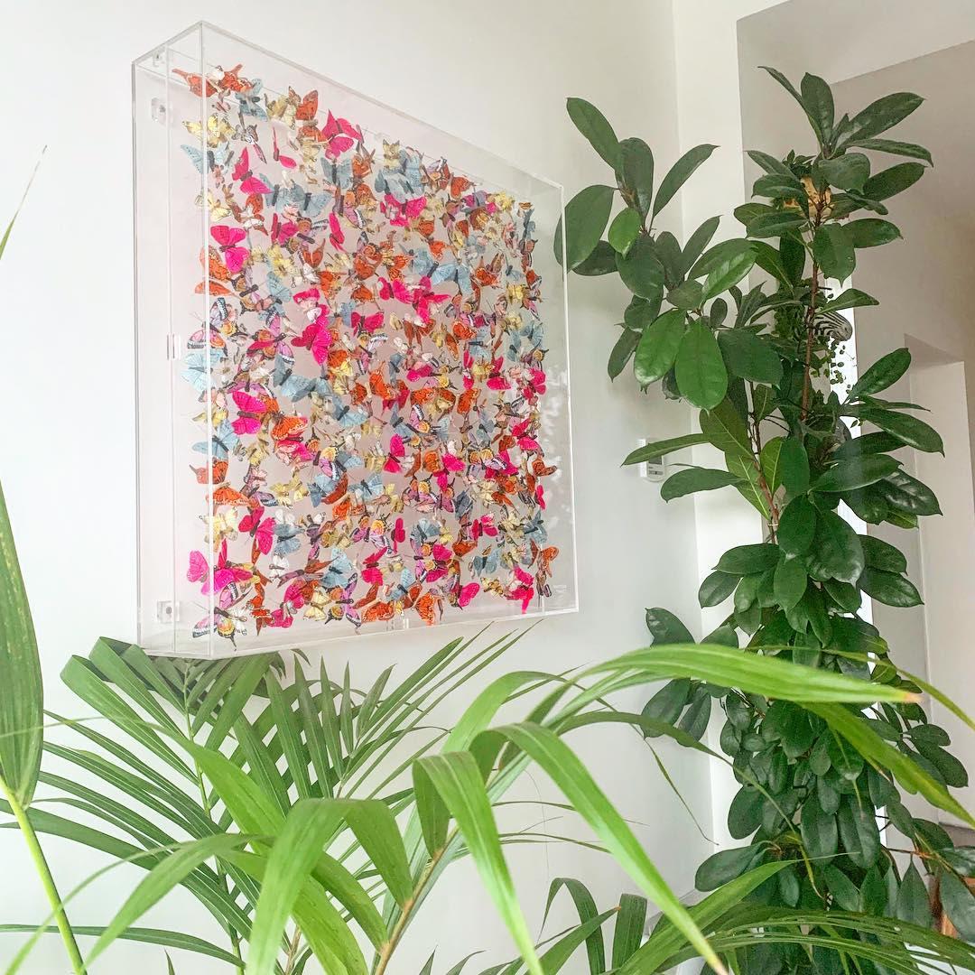 Hot pink butterflies in case walld decor