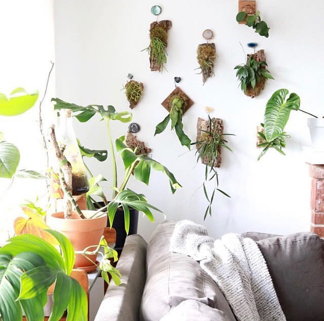 Live wall plant hangers