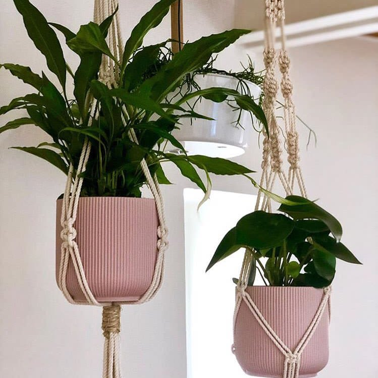 Macrame woven plant hanger with pink potted plant