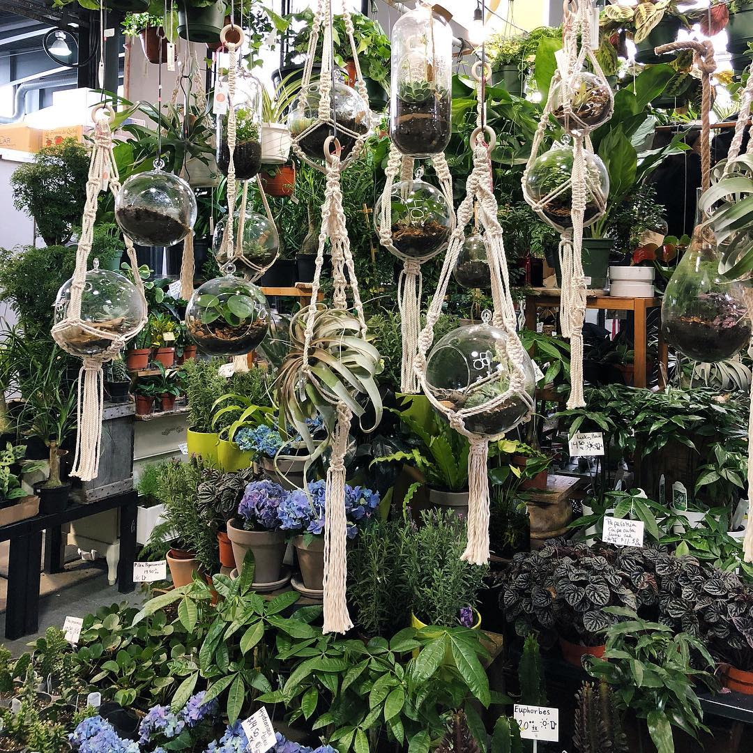 Macrame hanging plants in glass terrariums