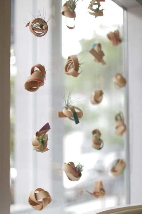Vases & Vessels by Art of Plants at 16 Handles, Brooklyn - Suspended Air Plant