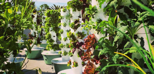LA Urban Farms - Plants & Flowers and Floral & Garden