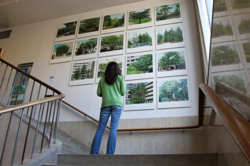 Paintings by Ellen Harvey seen at UCSF, Parnassus Avenue, San Francisco - The Forest of Parnassus