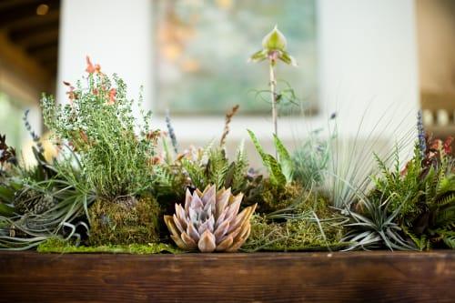 Lila B. Design - Plants & Landscape and Planters & Garden