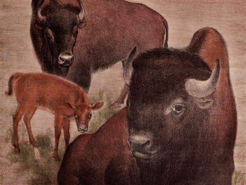 Suzanne Scheuer - Murals and Art