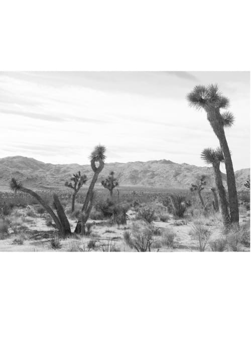 Photography by Wilder California seen at Pioneertown Motel, Pioneertown - Joshua Tree #4