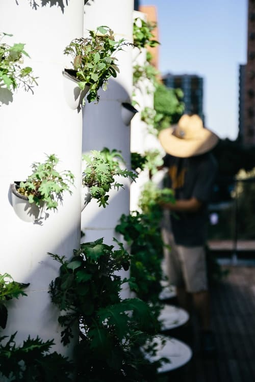 Plants & Flowers by LA Urban Farms seen at Otium, Los Angeles - Vertical Gardens