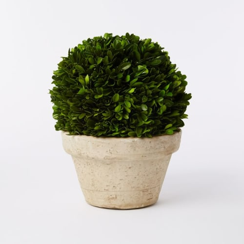 Furniture by West Elm seen at JW Marriott Essex House New York, New York - Boxwood Round Trees