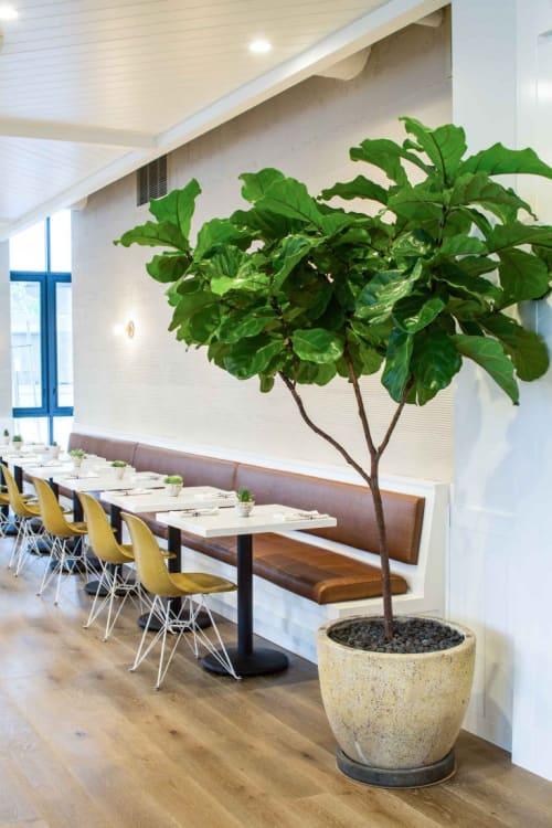 Plants & Landscape by Hollyflora at Café Gratitude (Arts District), Los Angeles - Plants