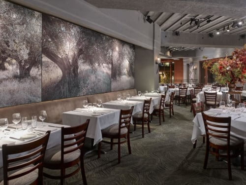 Photography by Deborah O'Grady seen at Oliveto, Oakland - Libra Acoustic Image System with a Photographs of Olive and Oak Trees
