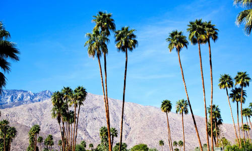 Photography by Jolie Anna Goodson seen at Private Residence, Portland - Palm Springs Blue