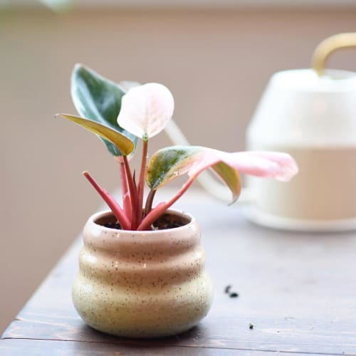 Vases & Vessels by Mud Witch by Viviana Matsuda seen at And Their Plant Stories, Seattle - Rainbow Pot