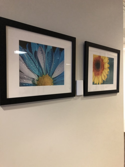 Photography by Vanessa Thomas seen at Bank of America Mortgage, Pleasanton - Chrysanthemum and Vibrance