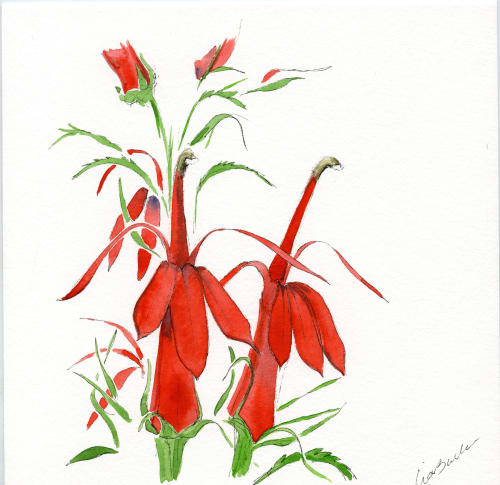 Paintings by Lia Burke Libaire seen at Nantucket, Nantucket - Botanical Painting