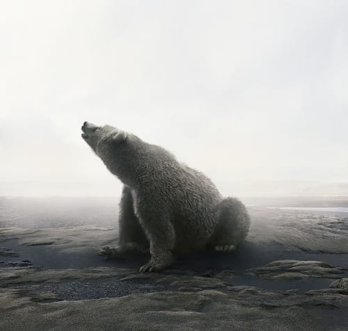 Photography by Alice Zilberberg seen at ZK Gallery, San Francisco - Bear with It