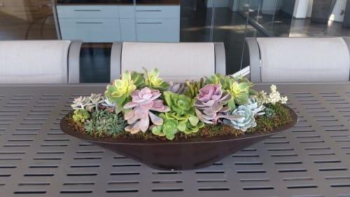 Botanika - Plants & Flowers and Floral & Garden