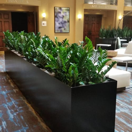 Plants & Flowers by Botanika Interior Plantscapes seen at Embassy Suites by Hilton San Diego La Jolla, San Diego - ZZ Plants