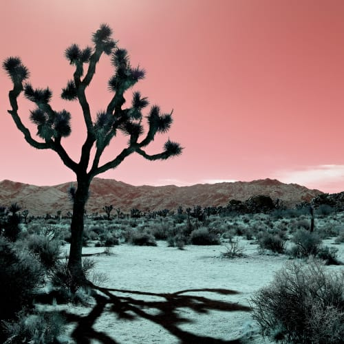Photography by Kristin  Hart  Studios seen at Joshua Tree National Park - JOSHUA TREE - ROSE, California