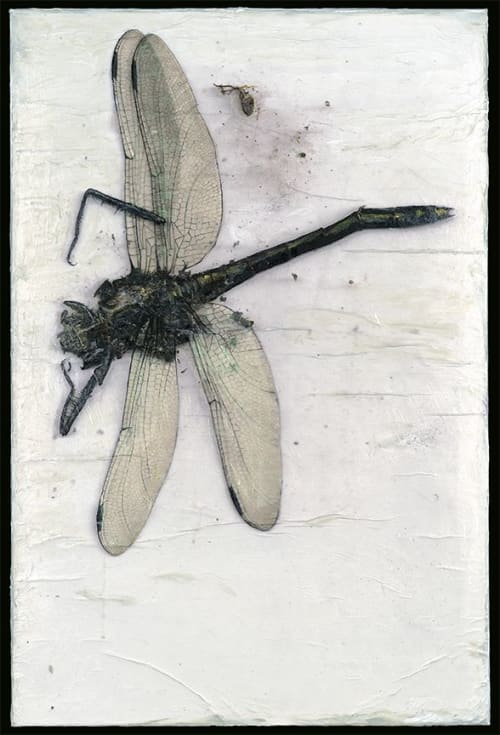 Interior Design by Rosemary Feit Covey seen at Private Residence, Stockholm - Insects