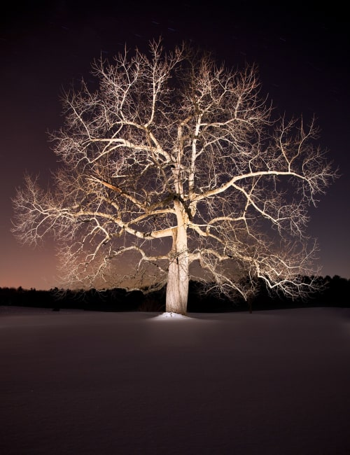 Black Walnut picture | Photography by Chris Becker