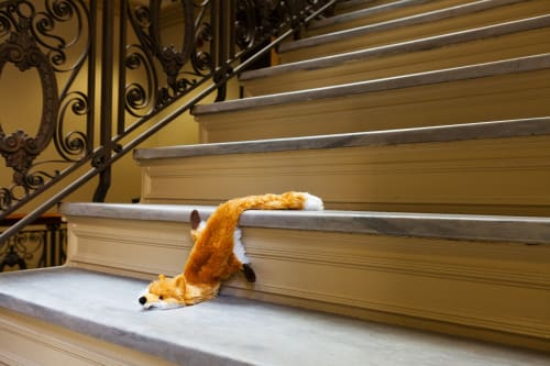 Photography by Jeanette May seen at Private Residence, McLean - Morbidity & Mortality: Fox