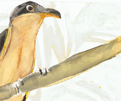 Art & Wall Decor by ISA CATTO STUDIO - Mangrove Cuckoo Ed. of 25