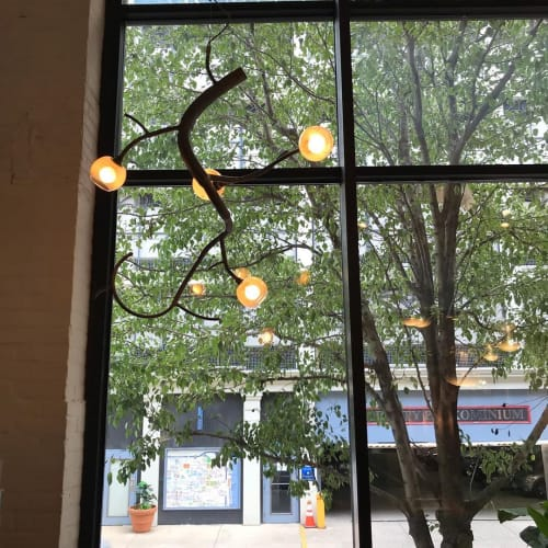Chandeliers by CP Lighting seen at Poggenpohl Philadelphia Kitchen Design Studio, Philadelphia - Custom Budding newGROWTH Chandeliers