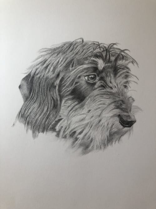 Art & Wall Decor by Lottie Anderson Fine Art seen at London, London - Pet Pencil Portrait