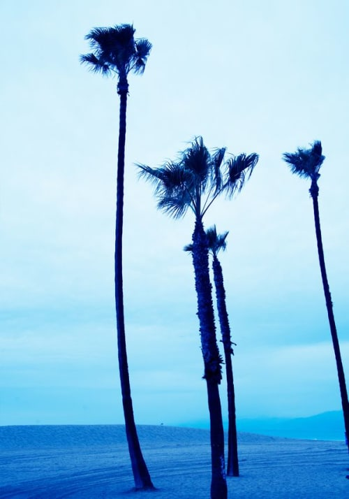Photography by Robert van Bolderick seen at Stockholm, Stockholm - Venice Beach Blue Palmtrees II