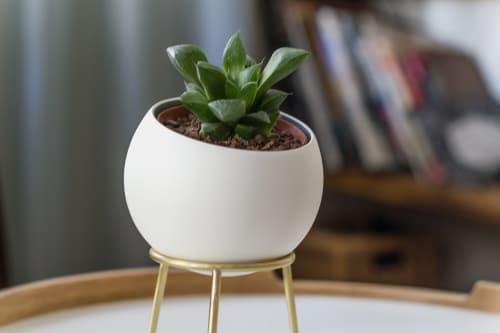 Vases & Vessels by Kitbox Design seen at Private Residence - Globe Cactus Planters
