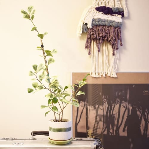 Macrame Wall Hanging by Double Rainbow Design seen at And Their Plant Stories, Seattle - Macrame