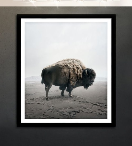 Photography by Alice Zilberberg seen at Toronto, Toronto - Be Here Bison