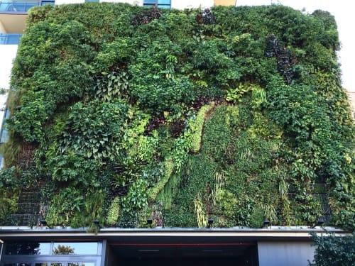 Plants & Flowers by Fytogreen Australia seen at Brisbane, Brisbane - Green Wall - Fytowall
