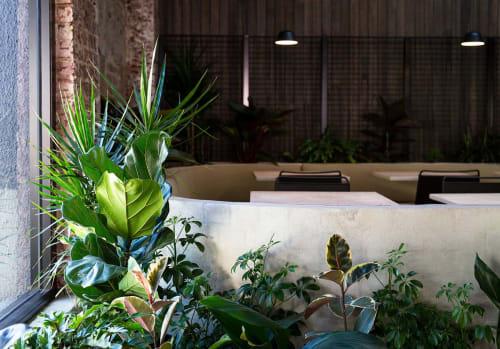 Emma Sadie Thomson - Plants & Flowers and Planters & Garden