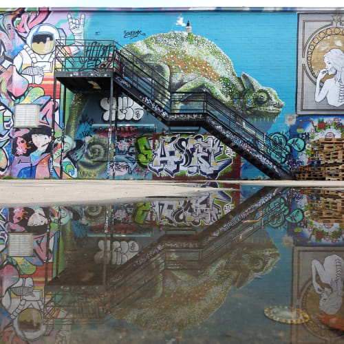 Street Murals by Anat Ronen seen at Houston, Houston - The chameleon