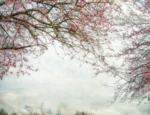 Dianne Poinski - Photography and Paintings