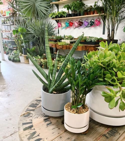 Plants & Landscape by LBE Design seen at Lawrence & Clarke Cacti Co, Nashville - Round Two by Revival ceramics