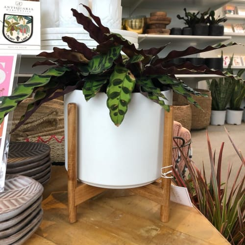Vases & Vessels by LBE Design seen at Landmark Plant Co, Encinitas - The Eight w/ Stand Planter