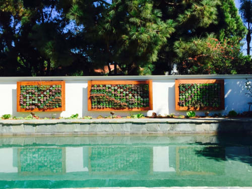 Plants & Landscape by Harvest to Home at Costa Mesa, CA, Costa Mesa - Outdoor Succulent Wall
