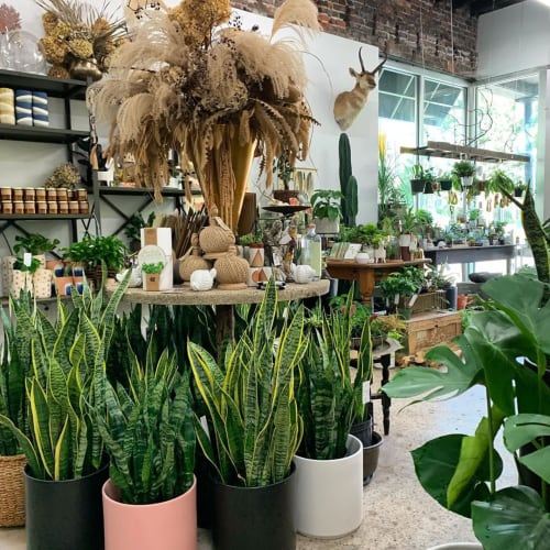 Interior Design by LBE Design seen at Grounded Plant and Floral Co, Indianapolis - Cylinders by Revival ceramics