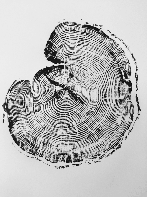 Tree Slice Tree Ring Art Print   Art & Wall Decor by Erik Linton
